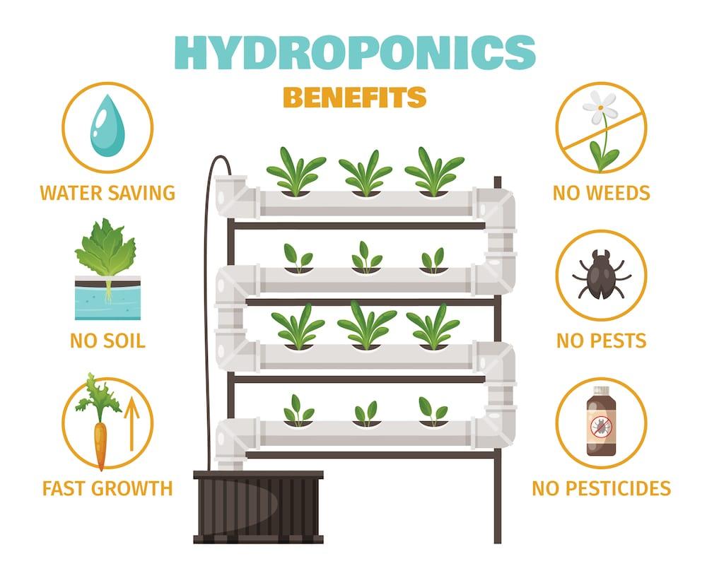 Hydroponic Gardening Benefits