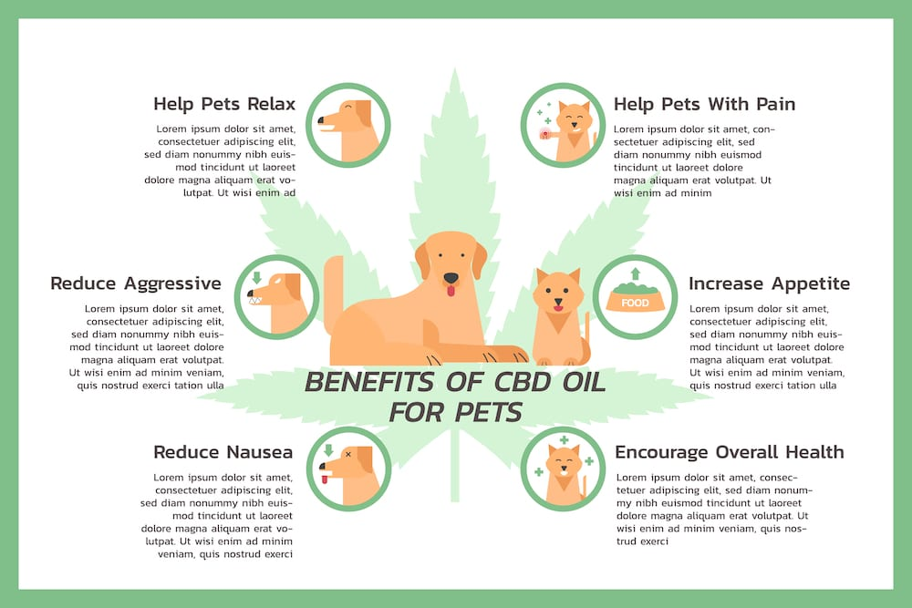 Benefits of CBD for Dogs